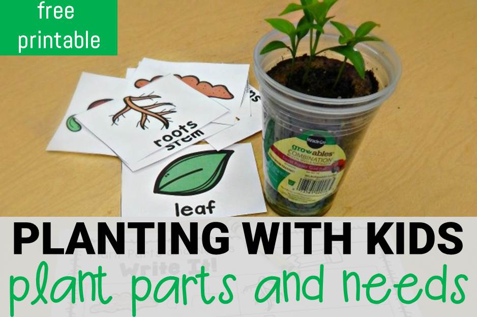 Planting With Kids – Plant Parts and Needs