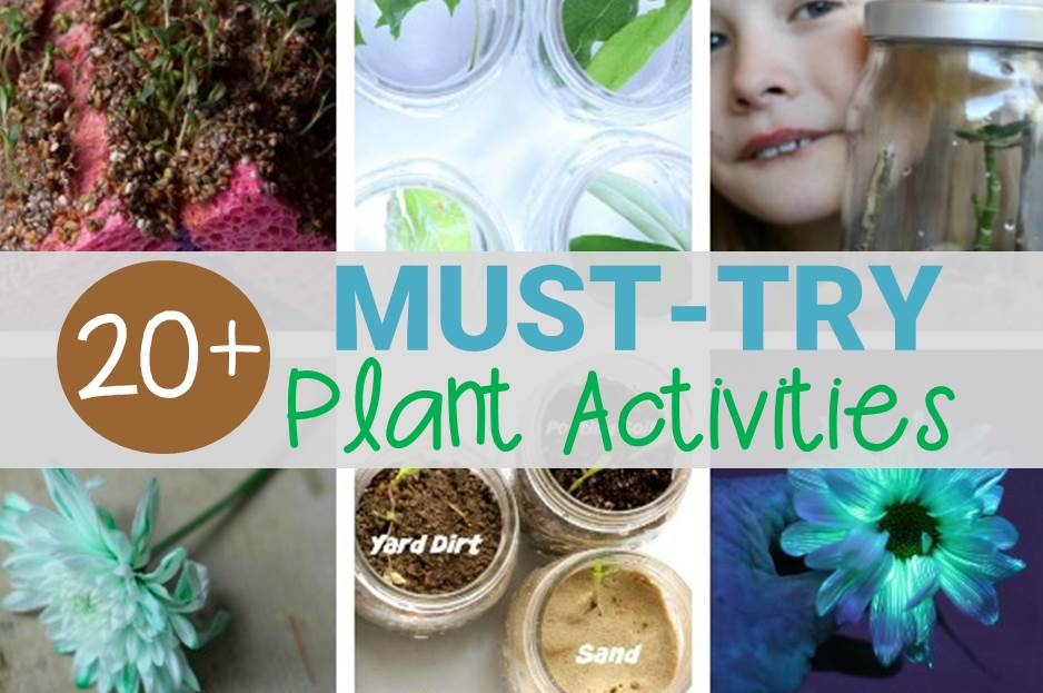 Must-Try Plant Activities Kids Will Love!