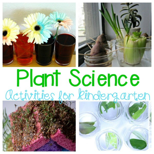 Kids will love learning about plants with these hands-on plant activities! Learn about seed sprouting, soil conditions, how plants breathe, and more!