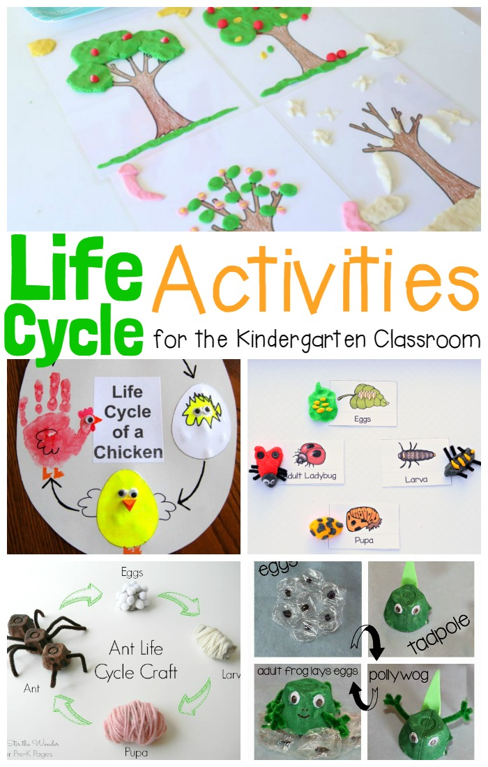 Kids will love these hands-on and engaging life cycle activities! Learn about the life cycle of a plant, life cycle of animals, and so much more!