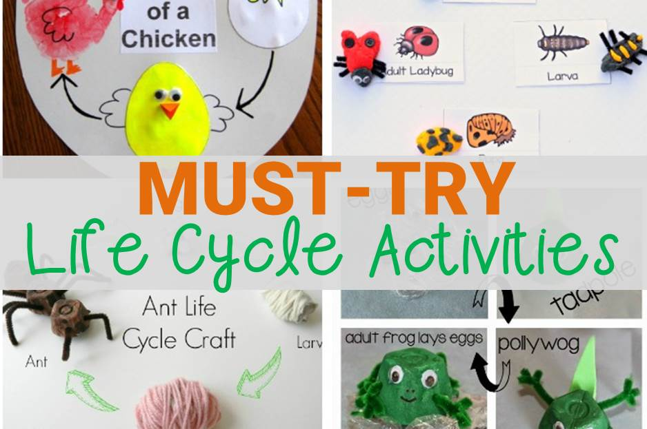 Must-Try Life Cycle Activities for Kids