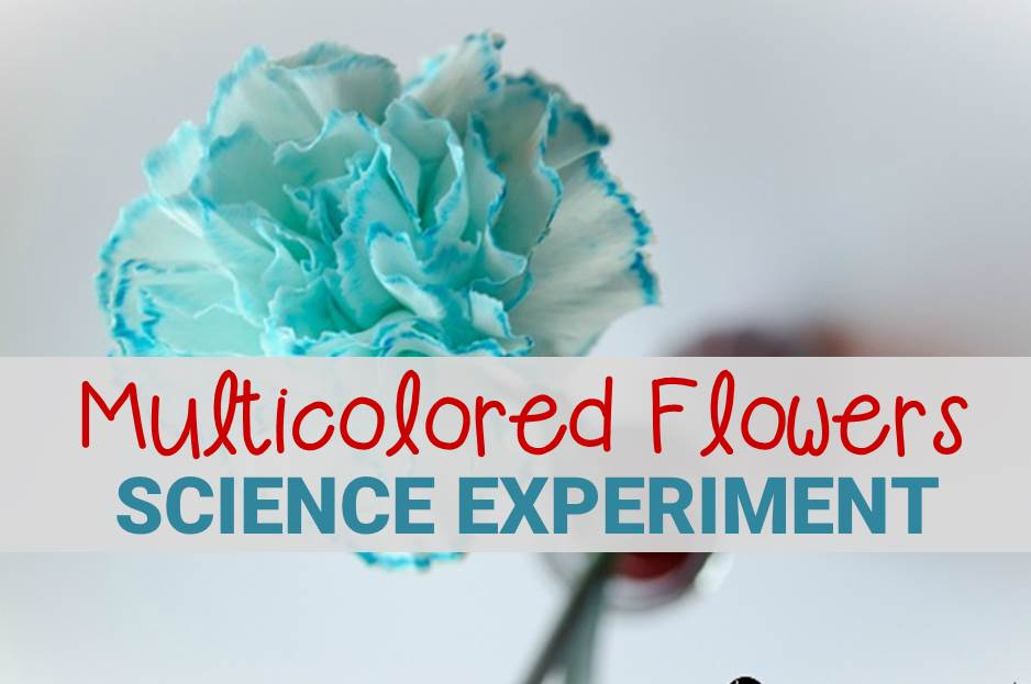 mutlicolored flowers science experiment