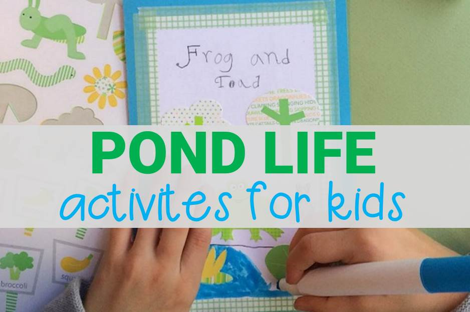 Pond Life Activities for Kids