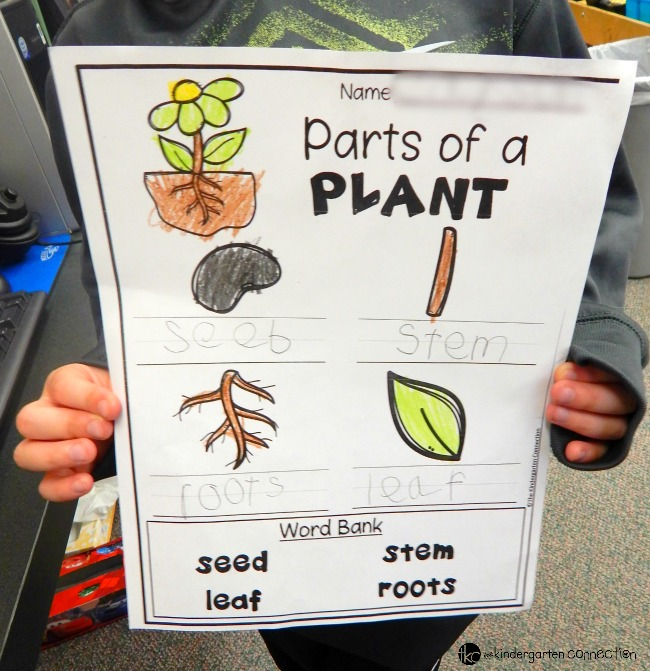 "Interested in gardening with kids? Make planting with kids fun with Gro-ables  and learn about plants with a free ""parts of a plant"" activity sheet!"