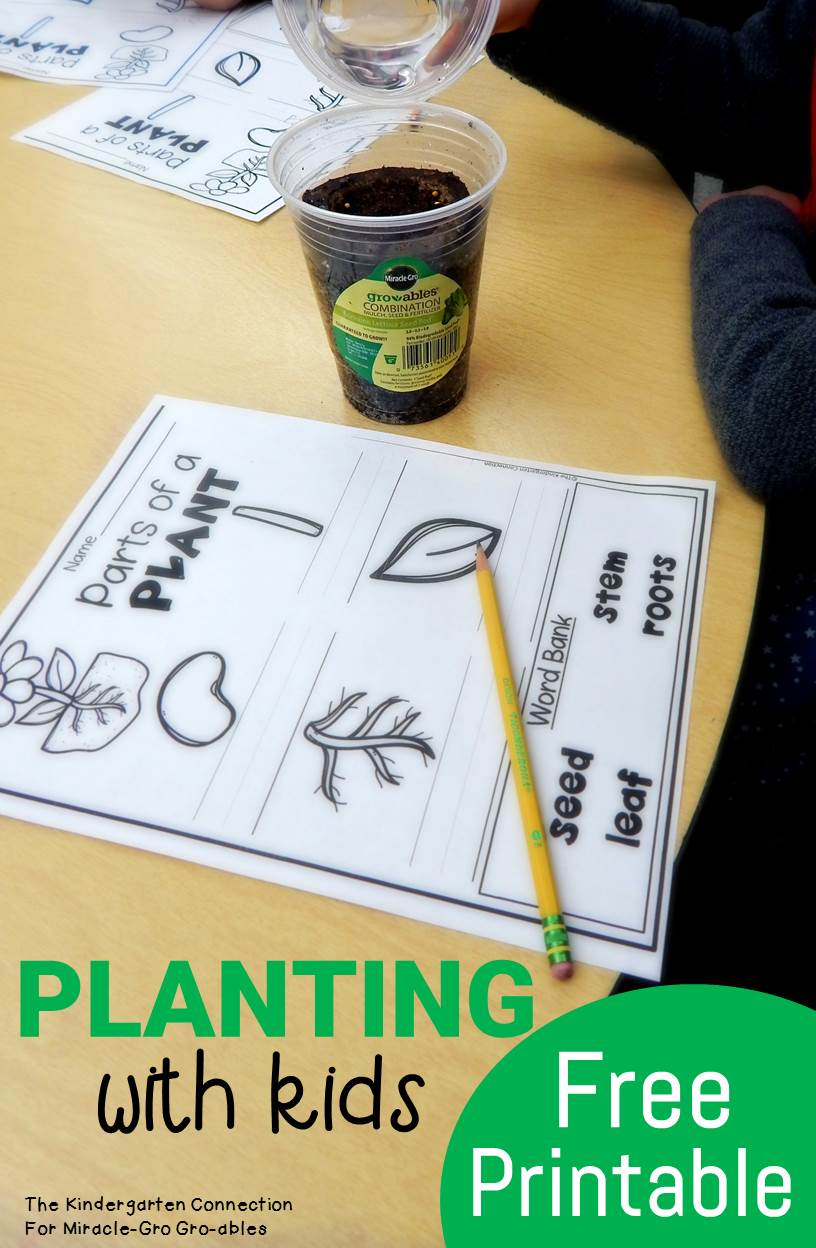"""Interested in gardening with kids? Make planting with kids fun with Gro-ables and learn about plants with a free """"parts of a plant"""" activity sheet!"""
