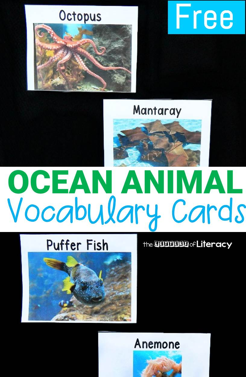 Learn about ocean animals and build up your vocabulary with these ocean animal vocabulary cards. They are great to add to your ocean unit of study!