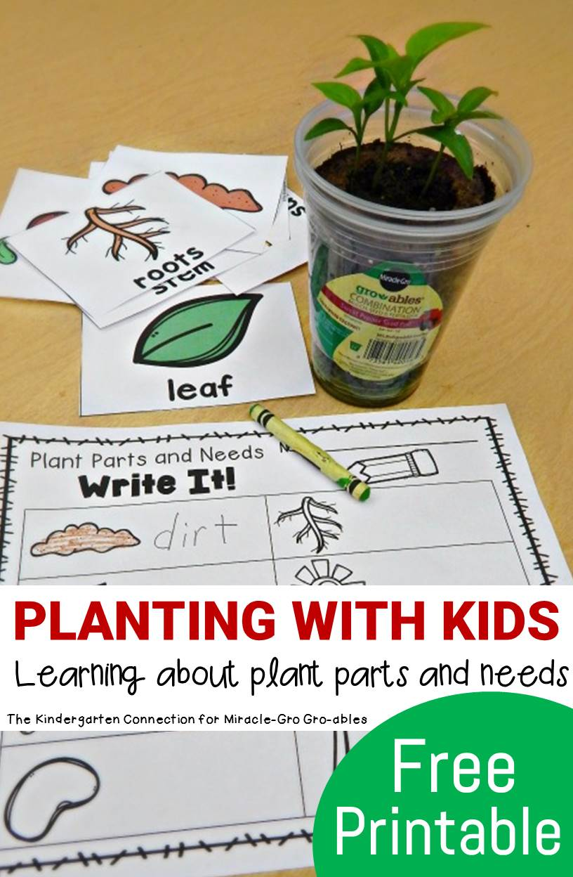 Planting With Kids - Plant Parts and Needs - The ...