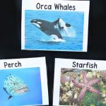 Ocean Animal Vocabulary Cards