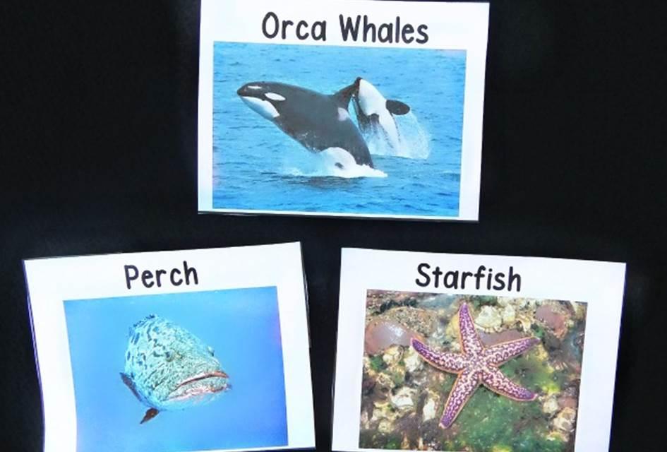 ocean animal vocab cards main image