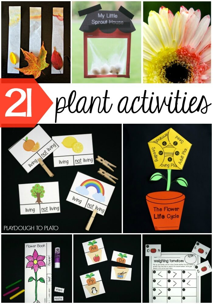 awesome plant life cycle activities for kids!
