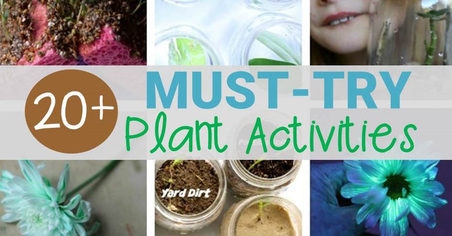 Must Try Plant Activities Kids Will Love