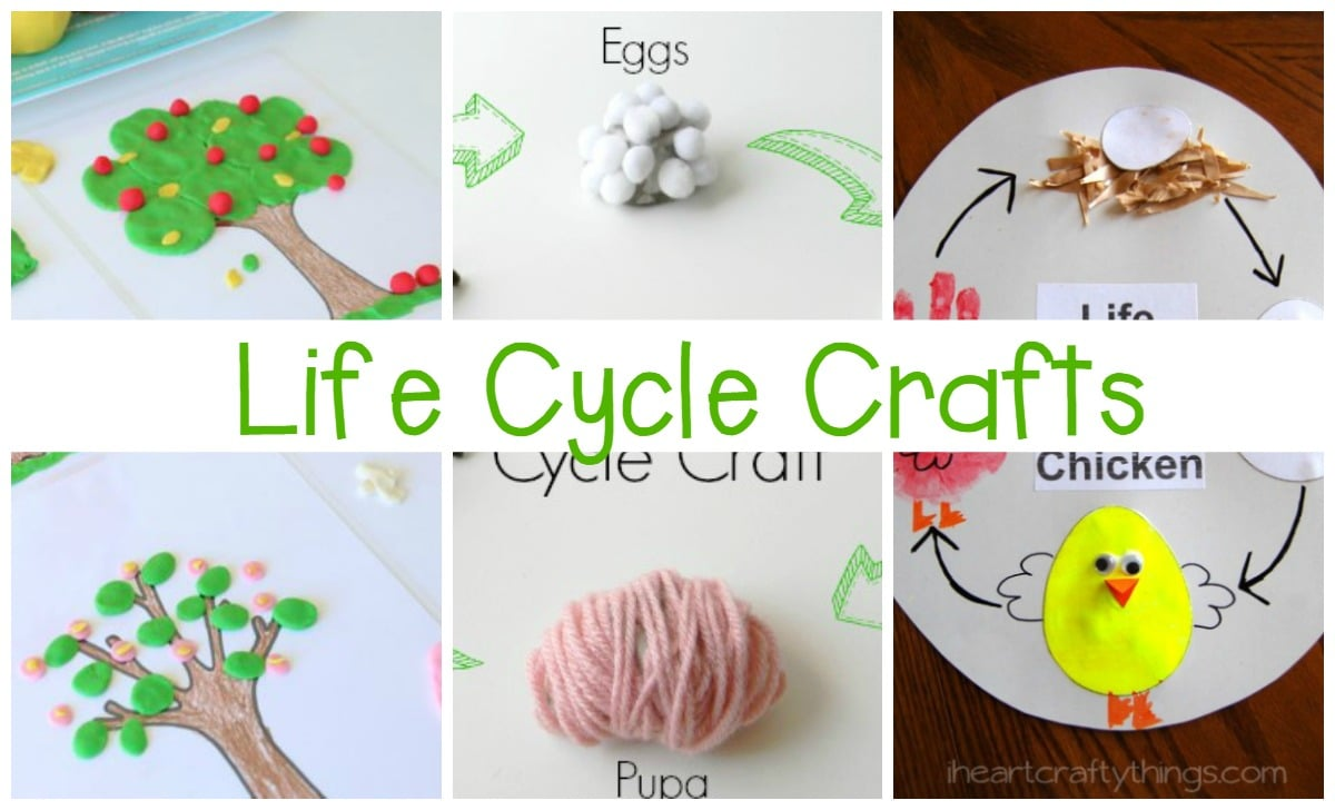Must Try Life Cycle Activities For Kids
